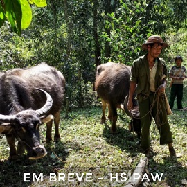 Hsipaw2270px