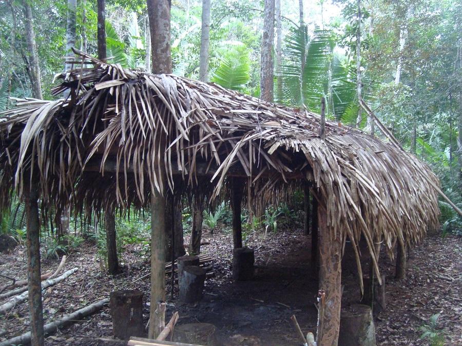 Floresta Amazônica!