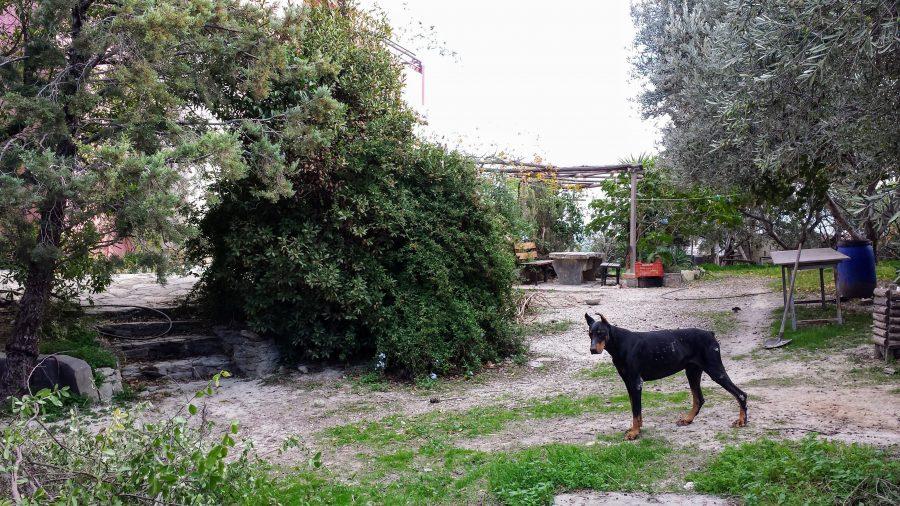 Fazenda em Creta na Grécia