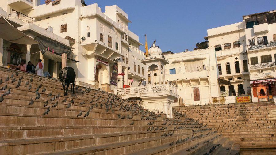 Pushkar India