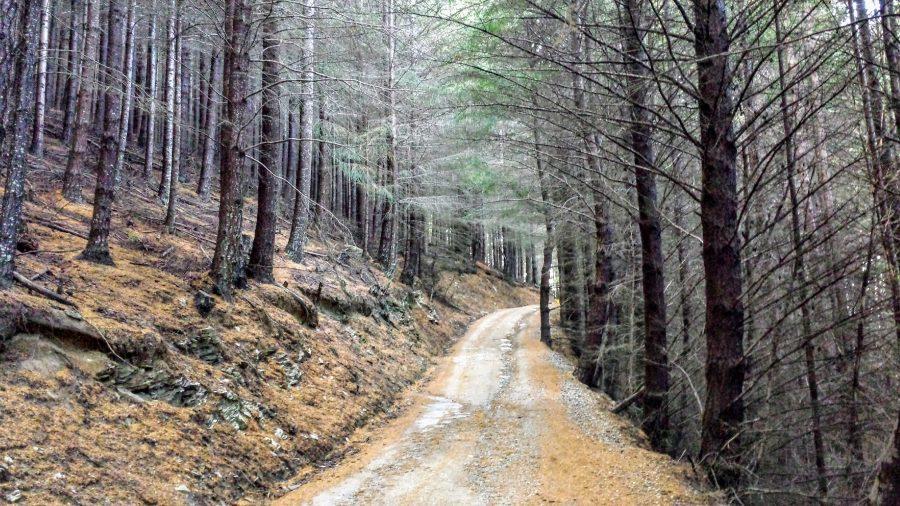 Trilha Tiki Trail